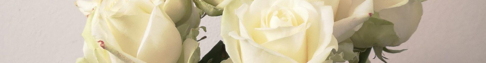 Dozzina di rose bianche